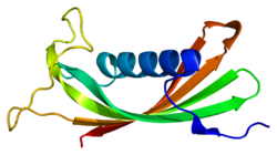 Protein CST5 PDB 1rn7.png