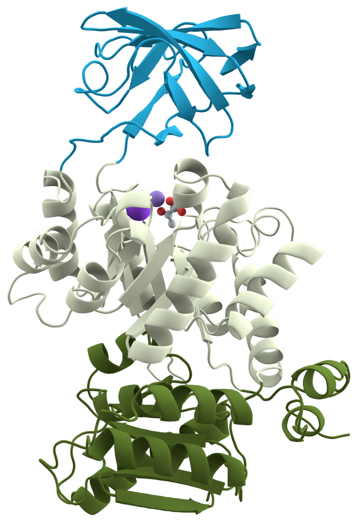 tertiary structure of protein pdf