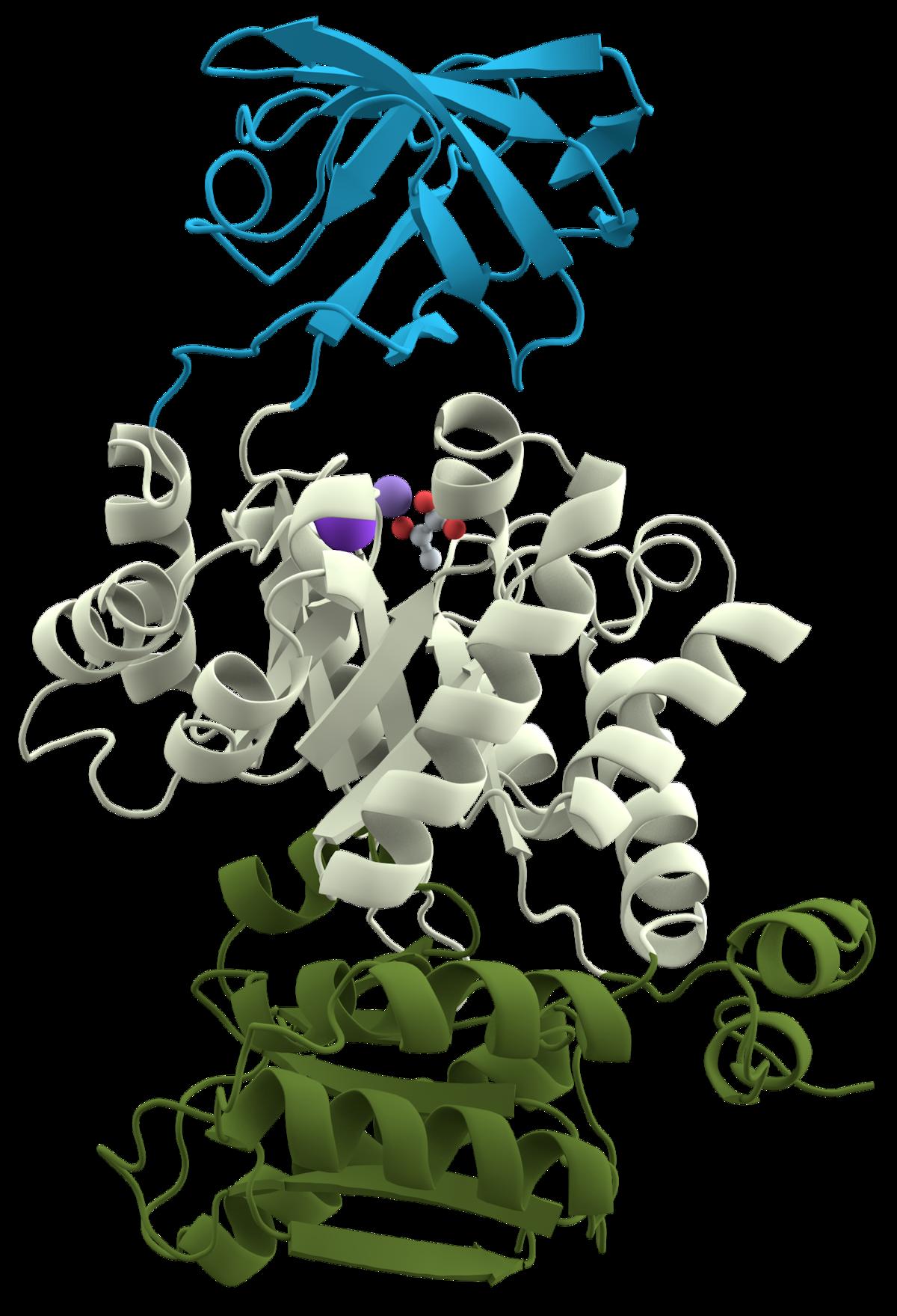 protein domain