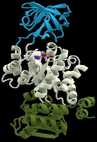 Pyruvate kinase - 3D structure of pyruvate kinase