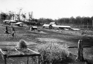 Kairi, Queensland - Kaira State Farm, circa 1930
