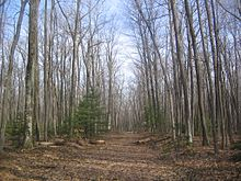 View along a cleared path through a forest of leafless trees and a few pines.