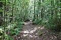 RNR Bois des Roches-6 (36).jpg