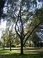 Radipole Park Gardens 2 - geograph.org.uk - 1474670.jpg