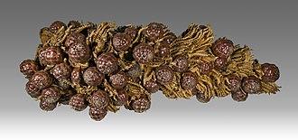 Raffia palm - Image: Raphia farinifera MHNT.BOT.2007.26.50