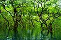 Ratargul Swamp Forest, Sylhet, Bangladesh.jpg