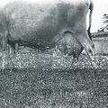 Ray farm 1940s Ashland Alabama 07.jpg