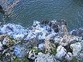 Real Parque del Buen Retiro (2806550053).jpg