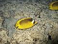 Red sea-reef 3416.jpg
