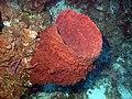 Reef3860 - Flickr - NOAA Photo Library.jpg