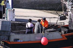 Retour de la pêche à la seiche du fileyeur Jason IV (16).JPG