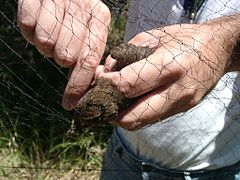 Ringing 03 Extracting bird from net.jpg