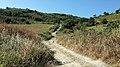 Riserva Naturale orientata Serre di Ciminna - Flickr - Rino Porrovecchio.jpg