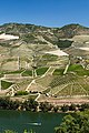 River Douro Valley Portugal - Vallée de la rivière Douro Portugal - Wine Vin Porto - Picture Image Photography (14962280582).jpg