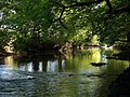 River Torridge - geograph.org.uk - 575039.jpg