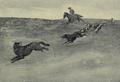 Roosevelt wolf hunt.png