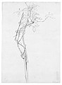 "Rose Branch, Study for ""Carnation, Lily, Lily, Rose"" MET 50.130.119 verso.jpg"