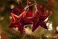Rote Weihnachtsbaum-Sterne.jpg