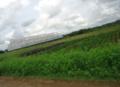 Rural farmland.png
