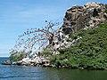 Rusinga Island-3.jpg