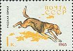 Russian-Scent-Hound-Canis-lupus-familiaris.jpg