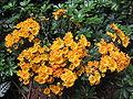 S2006 flowers 9.JPG