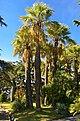 Sainte-Maxime - Boulevard de Beau Site - View NNW on Parc des Tourelles.jpg