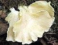 Saintly Mushroom - panoramio.jpg