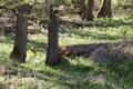 Schlitz Pford Fraurombach Breitecke NR 81455 Dead Wood b N.png