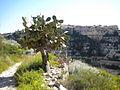 Scicli (Sicilia) 2010 042.jpg