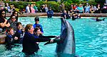 Sea World San Diego (25773517555).jpg