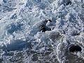 Sea lion in foamy water in La Jolla (70363).jpg