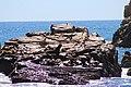 Sealions Basking at Cabo San Lucas - panoramio.jpg
