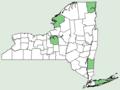 Sedum hispanicum NY-dist-map.png