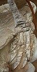 Seitaad ruessi holotype foot detail salt lake city.jpg