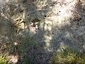 Sendero-embalse-de-Bornos P1420639.jpg