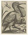 Serie van 9 vogels- Sacco Marino.jpeg