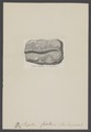 Serpula flagellum - - Print - Iconographia Zoologica - Special Collections University of Amsterdam - UBAINV0274 007 01 0032.tif