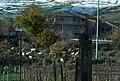 Sheep in Randazzo.jpg