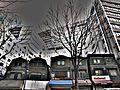 Shibuya tokyo - panoramio.jpg