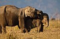 Siblings Love at Dhikala Grassland, Jim Corbett National Park.jpg