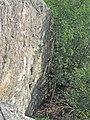 Skeviks grotta klättring.jpg