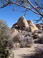 Skull Rock 0557 RobbHannawacker.jpg