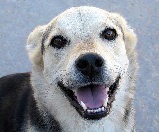 Smiling Dog (2594247316)