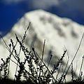 Snow caped Mountain.jpg