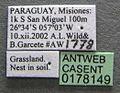 Solenopsis wasmannii casent0178149 label 1.jpg