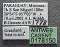 Solenopsis wasmannii casent0178150 label 1.jpg