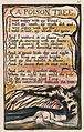 Songs of Innocence and of Experience, copy N, 1795 (Henry E. Huntington Library and Art Gallery) object 6-49 A Poison Tree.jpg