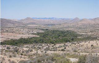 Desert riparian
