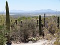 Sonora Desert - Flickr - gailhampshire (4).jpg